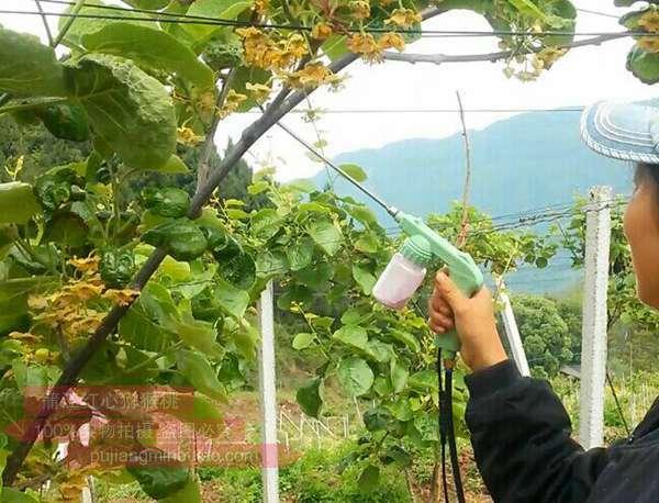 哪里可以买到2019年的猕猴桃新花粉价格贵吗保转型