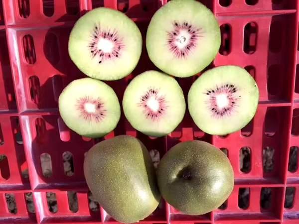 贵州毕节红心猕猴桃苗的价格取网上认养的方式