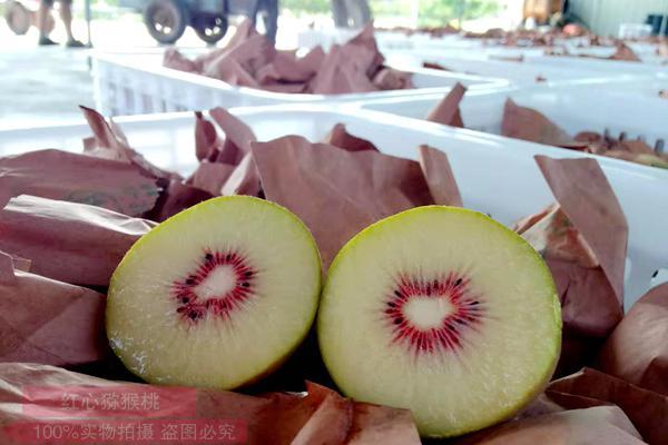 紅心獼猴桃不好保鮮 幾種常見的保存做法