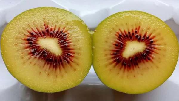根据规划红心猕猴桃种植技术十二五期间