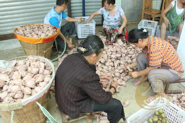 从红心猕猴桃批发零售团购价格是多少钱一斤成都