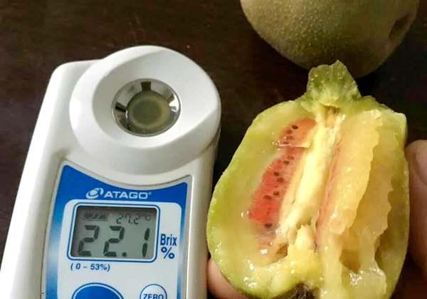 黄肉红心猕猴桃要放多久才可以吃催熟