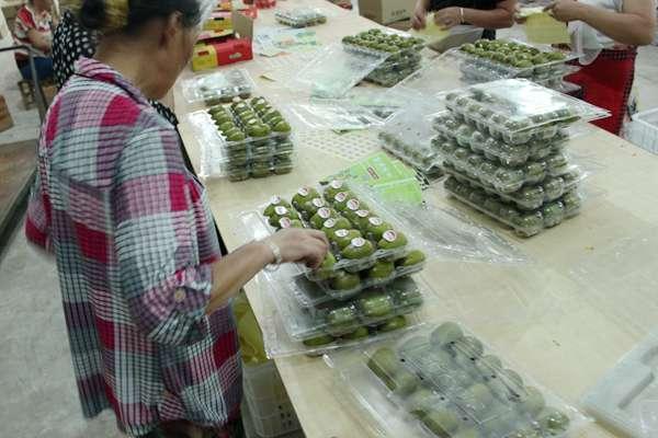 四川猕猴桃成批出口欧洲七国