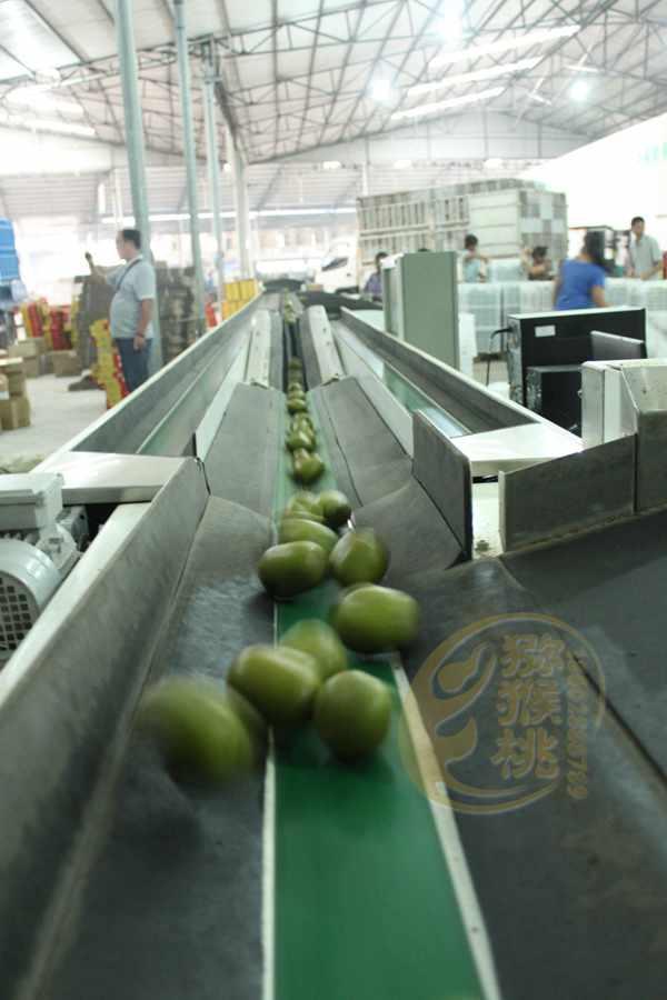 新西兰佳沛阳光金果和佳沛绿果走进中国消费者
