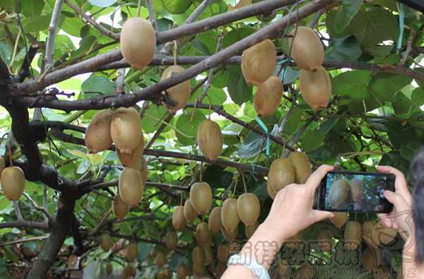 重庆和贵州主要的红心猕猴桃种植企业公司有几个
