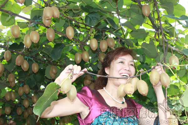 陕西西安市场上丑猕猴桃收到消费者追捧