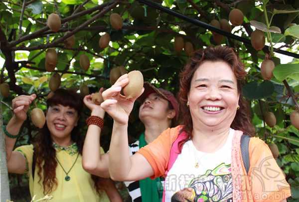 2020年由于市场上新西兰佳沛黄金奇异果供过于求