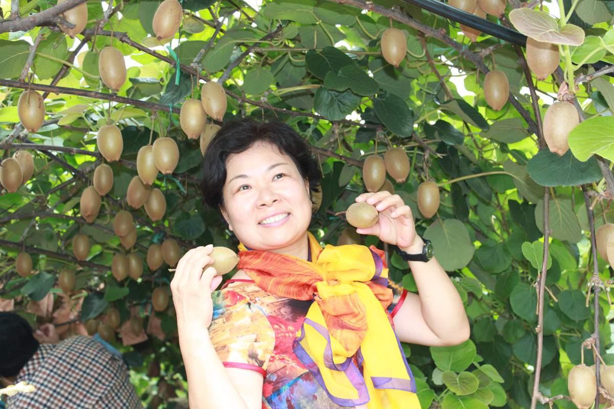 四川黄金奇异果可以使用阳光金果猕猴桃花粉吗