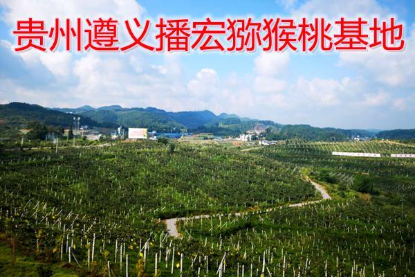 贵州播宏猕猴桃果业公司