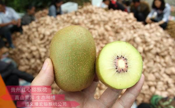 重庆邻水多家猕猴桃种植户联合组建专业合作社