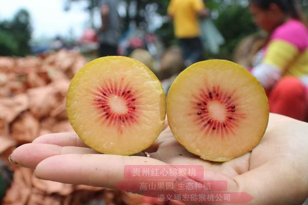 安徽贫困农民经过三年努力种植出红心猕猴桃