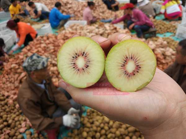 东红猕猴桃价格