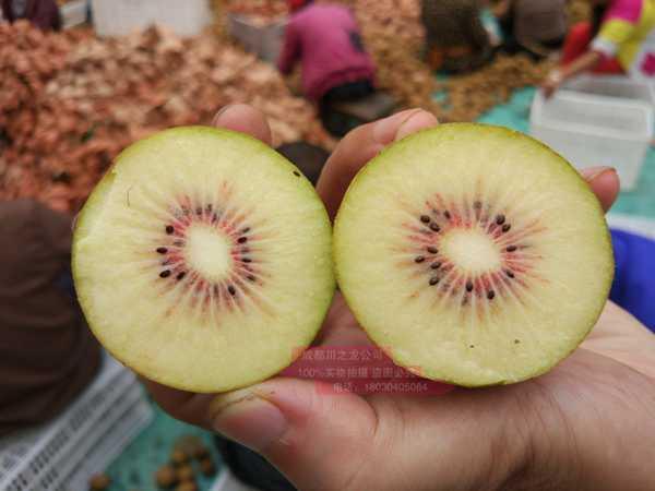 2019年的四川东红猕猴桃要是熟了 价格多少一斤