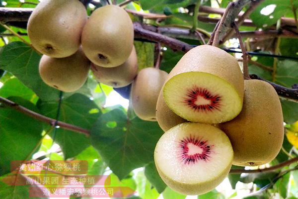 贵州遵义有机红心猕猴桃