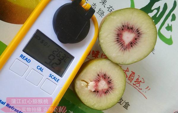 所以选择贵州遵义有机猕猴桃这个建果园 种出果真的太帅了