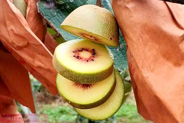 蒲江东红猕猴桃
