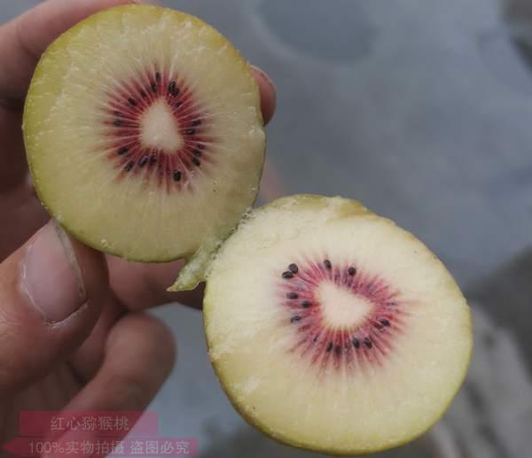 红心猕猴桃要放多久才可以吃催熟