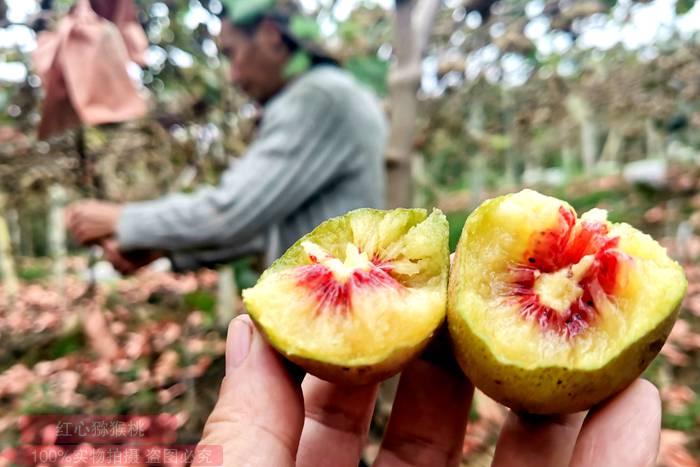 红心猕猴桃和黄心猕猴桃有什么区别