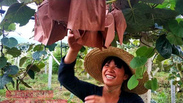 而以上点就是贵州遵义红心猕猴桃和绿心猕猴桃之间的差别