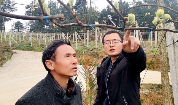 贵州贵长猕猴桃果园