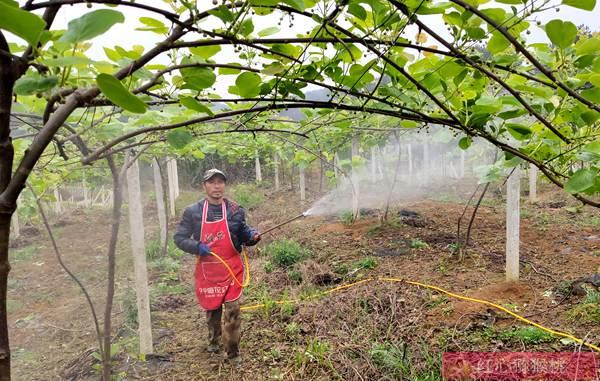 第二届湖北宜昌猕猴桃品鉴暨猕猴桃产业发展交流会日前在枝江举办