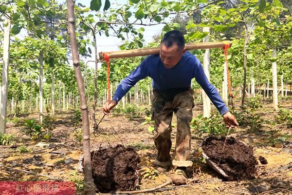 上海猕猴桃有机肥