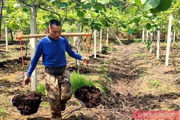 有机东红猕猴桃施肥