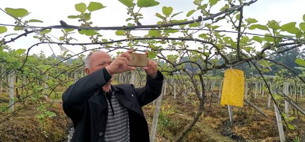 """江西""""90后""""農民 三年打造百畝紅心獼猴桃產業園"""