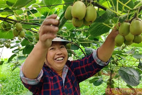 """上海亚洲果蔬博览会开幕 禾和""""金龙二号""""猕猴桃喜获好评 成为网红猕猴桃"""