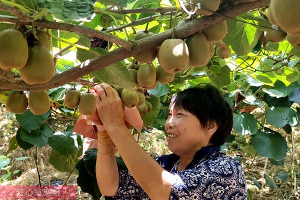 河南省西峡县猕猴桃产业的带头人李华玲