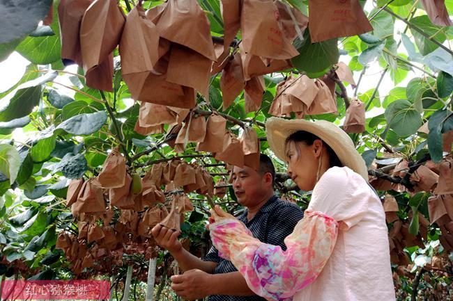 重庆市第二届四面山富硒红心猕猴桃节开幕