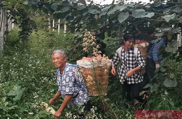云南省农业科学院热区生态农业研究所积极参与猕猴桃产业扶贫工作