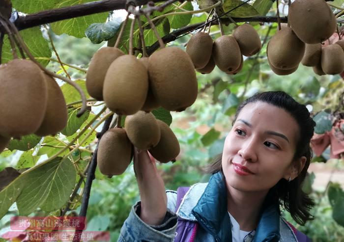 猕猴桃私人订制肥