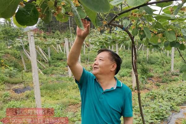 江西省赣州市安远县镇岗乡涌水村流金坑的猕猴桃产业扶贫示范基地