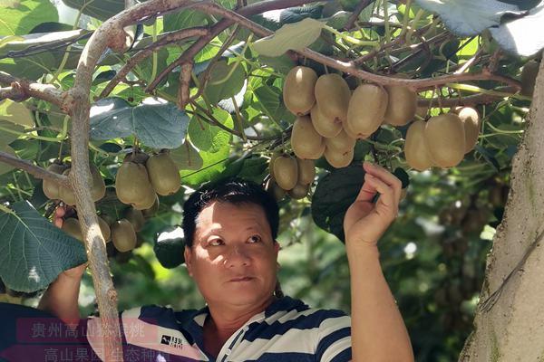 贵州毕节黔西县引进广东资金 种植万亩有机猕猴桃扶贫