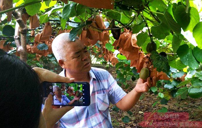 贵州东红猕猴桃种植果园