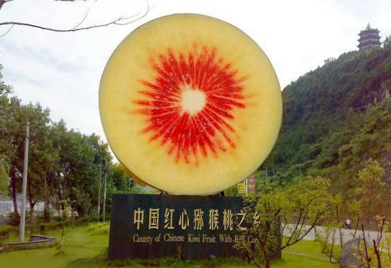 四川苍溪有机红心猕猴桃的品牌年从青岛鲜果市场的冉冉升起的新星