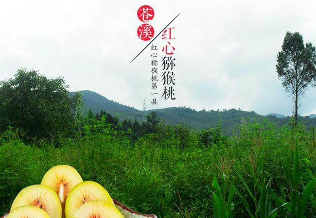 四川省苍溪红心猕猴桃生长在森林覆盖率