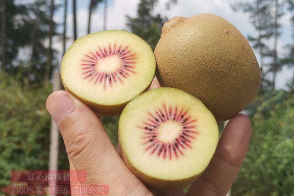 金红50猕猴桃