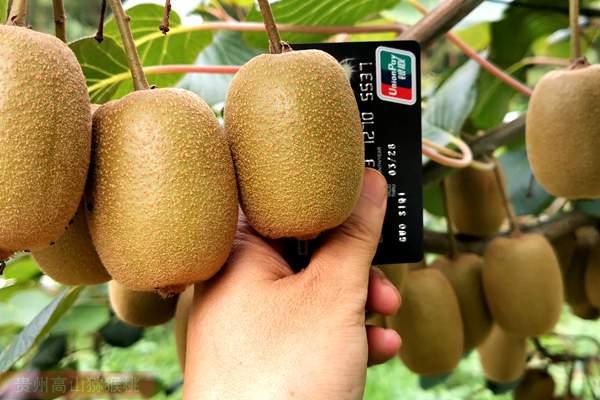 新西兰猕猴桃价格