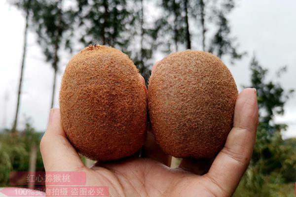 瑞玉猕猴桃