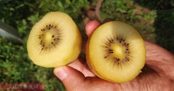 实施红心猕猴桃和黄肉猕猴桃疏果年