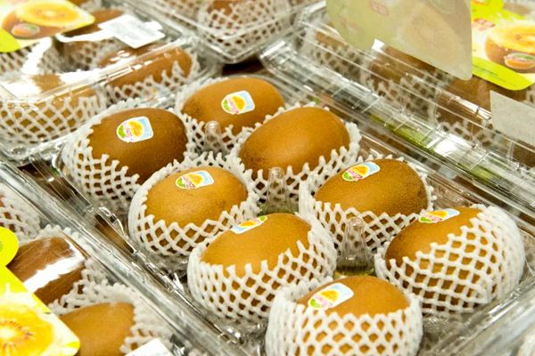 阳光金果sungold猕猴桃
