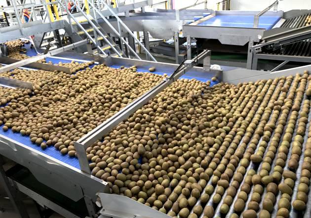 新西兰佳沛预计2025年全球奇异果销售额超过195亿元